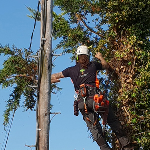 Tree surgeon performing Rope work
